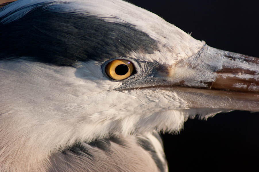 Eye of the ... N anderer Vogel